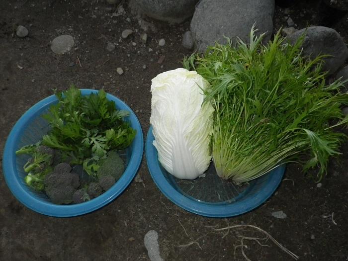 収穫1_15_01_09