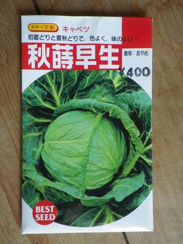 №4キャベツ【秋蒔早生(あやめ)】