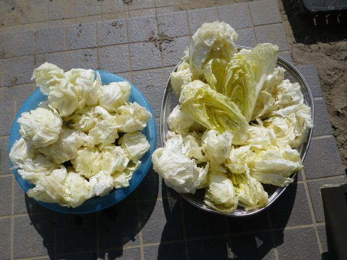 白菜3_15_02_21