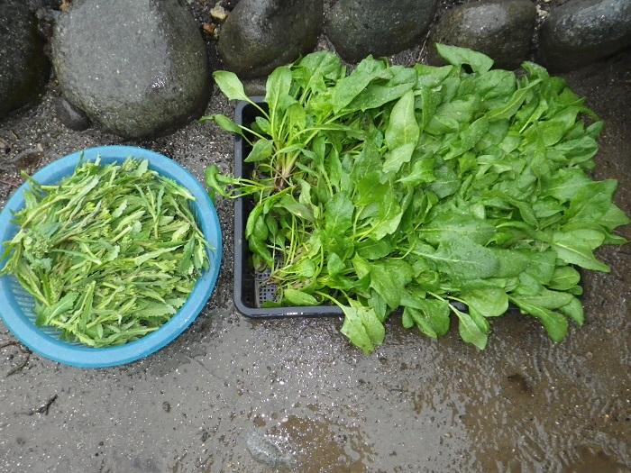 収穫3_15_03_01