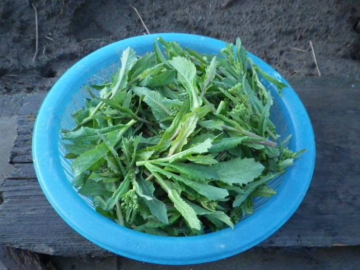 収穫15_03_04