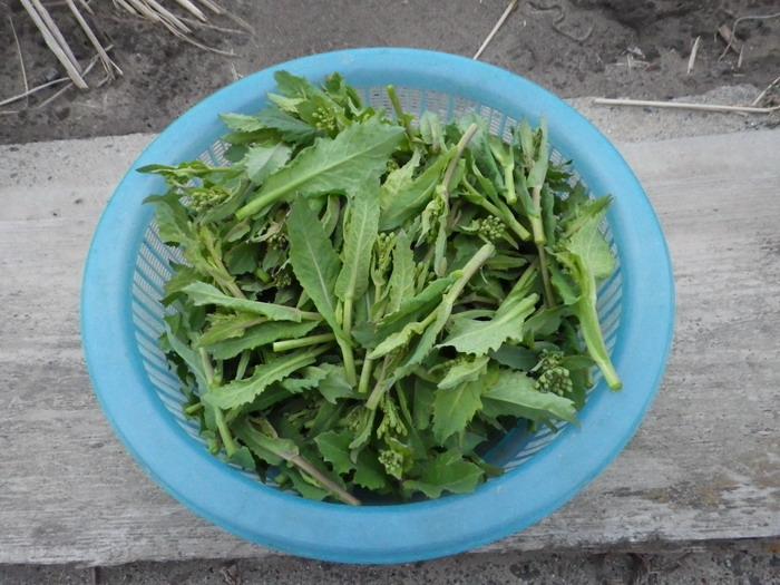 収穫15_03_06