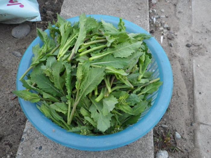 収穫15_03_09
