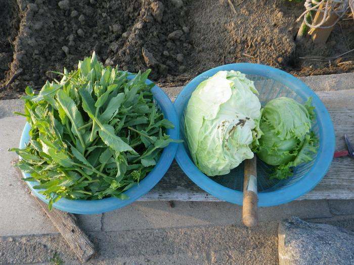 収穫15_03_18