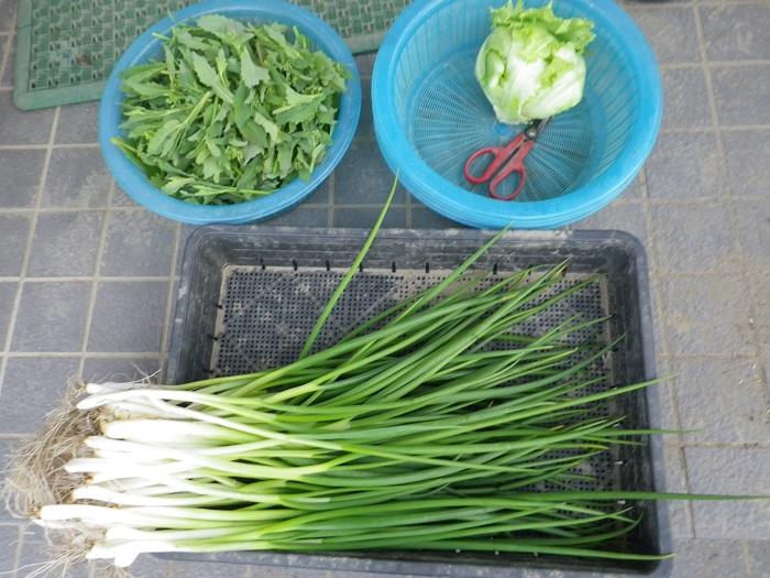 収穫1_15_03_28