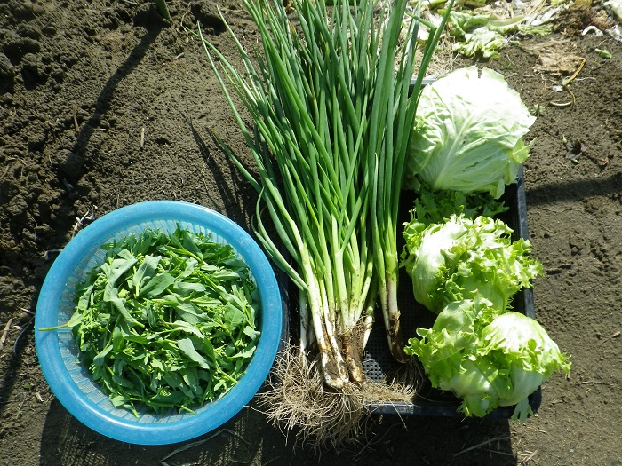 収穫3_15_04_04