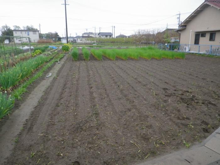 隣の畑15_04_08