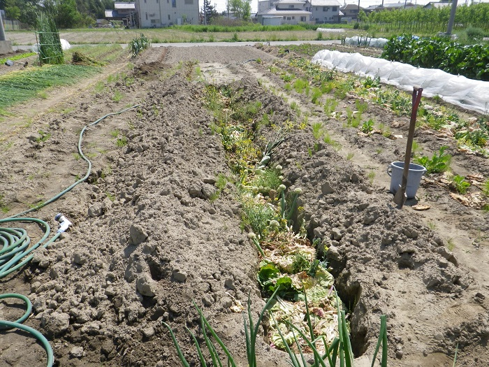 夏野菜準備1_15_04_25