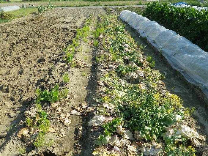 夏野菜準備2_15_04_25