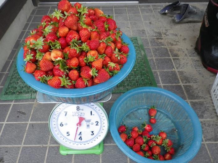 収穫1_15_05_04