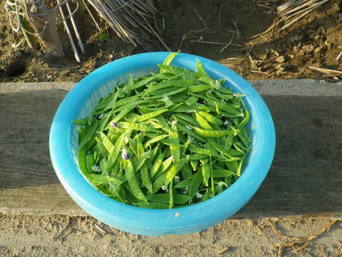 収穫15_05_08