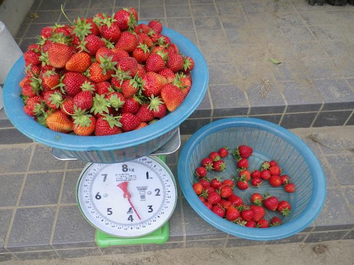 収穫1_15_05_09