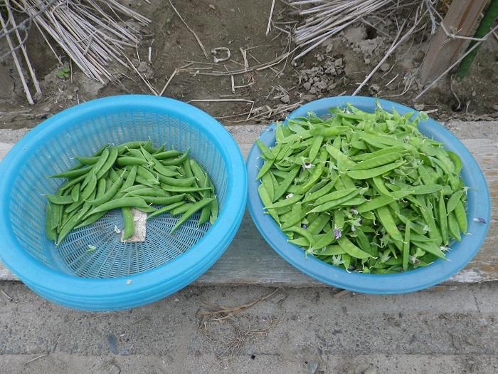 収穫2_15_05_09_