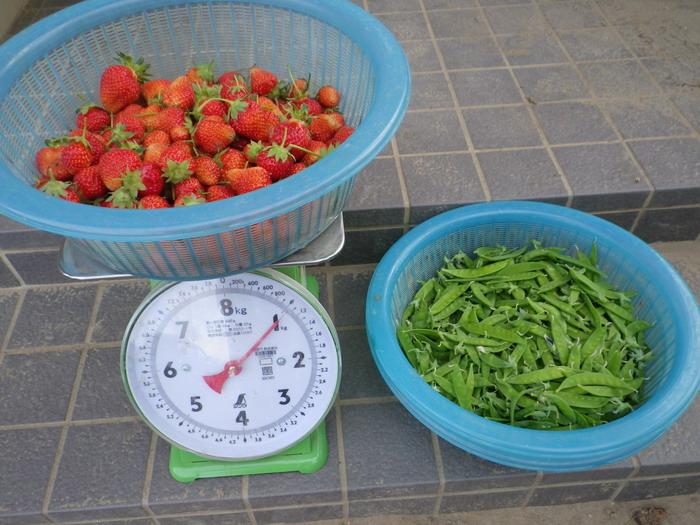 収穫15_05_11