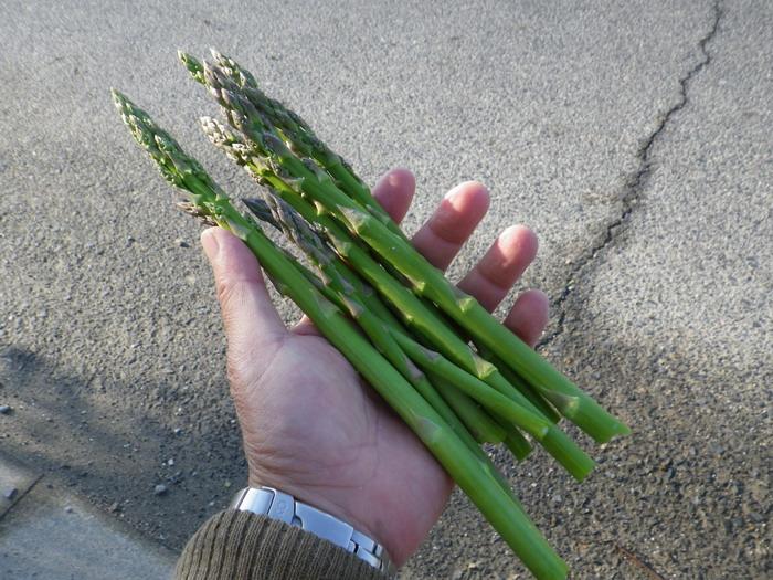 収穫アスパラ15_05_13