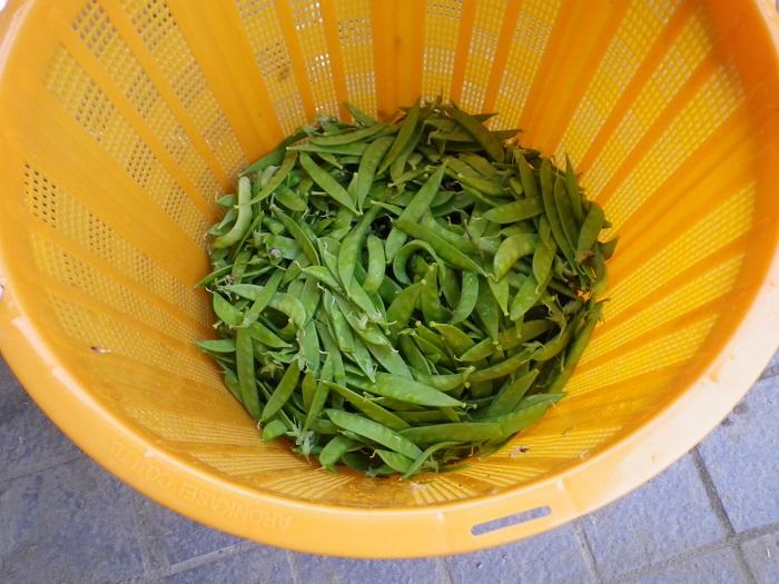 収穫15_05_16