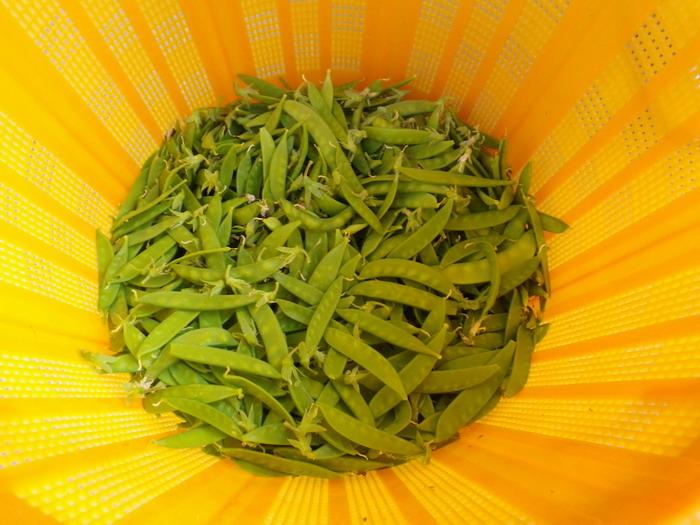 収穫15_05_18