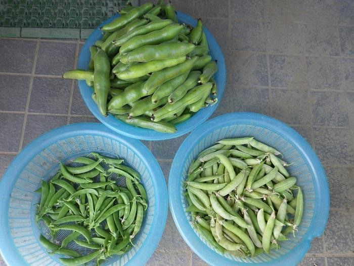 収穫3_15_05_24