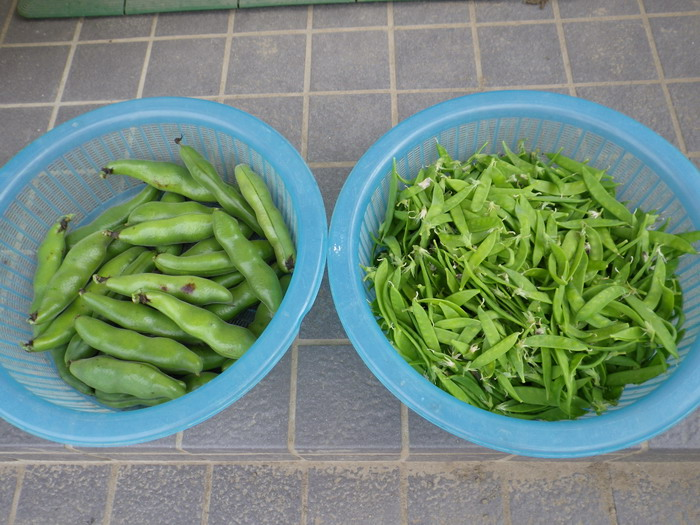 収穫15_05_25