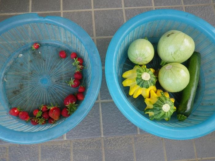 収穫15_05_30