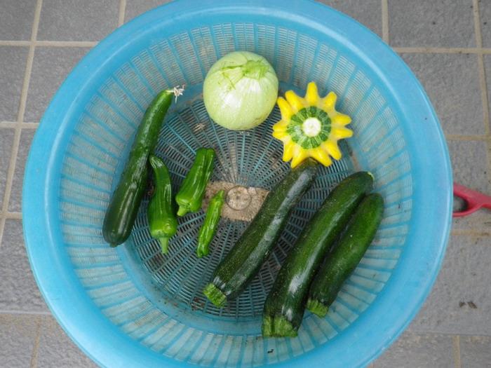 収穫15_06_08