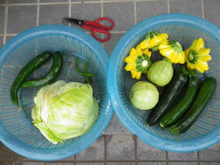 収穫15_06_09