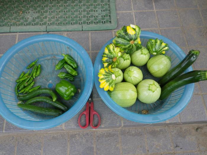 収穫15_06_11