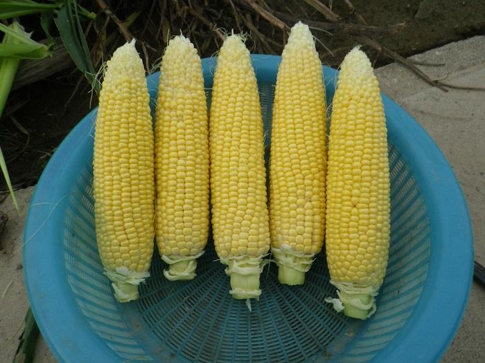 収穫2_15_06_14