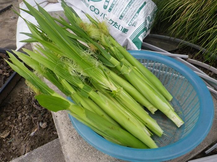 収穫7_15_06_14