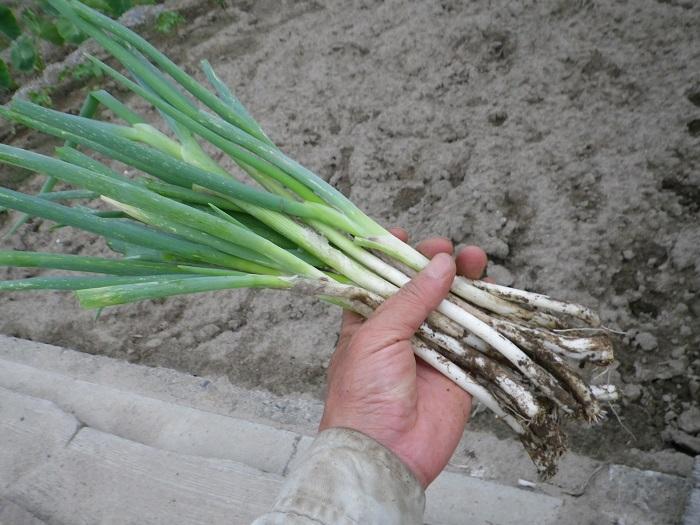 収穫9_15_06_14