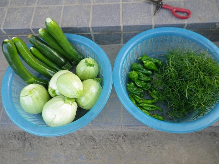 収穫15_06_15