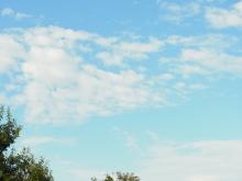 フラワーセラピストのつぶやき フラワースクールf.message 【茨城県筑西市】