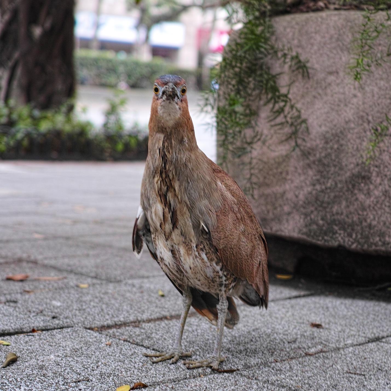 Taipei20140214.jpg