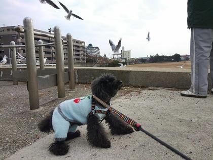 刺繍バッグと海へのお散歩 033
