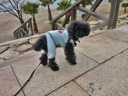 刺繍バッグと海へのお散歩 043