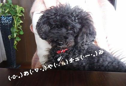 Fueおねむちゃん2-crop