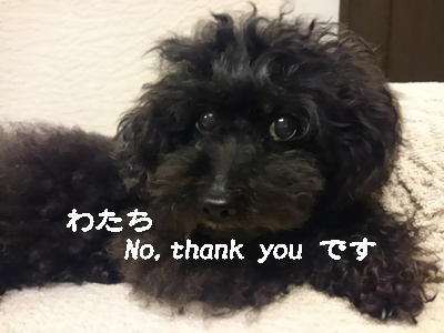 Fueちゃんおふろ2 332