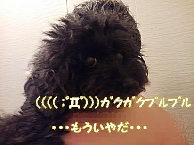 Fueちゃんおふろ2 338