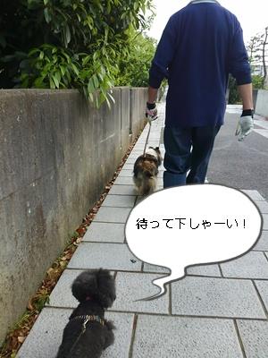 1おりんごちゃん 1401