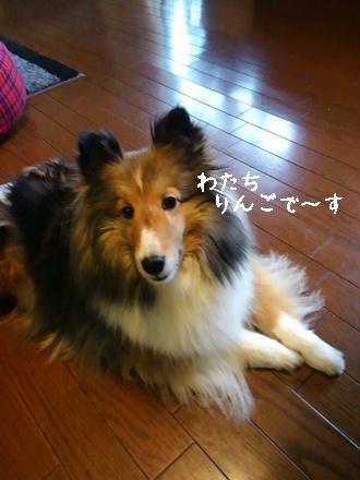 1おりんごちゃん 1425