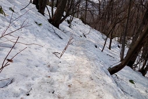 雪面には木の実がいっぱい