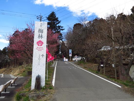 梅まつり筑波山 033ume