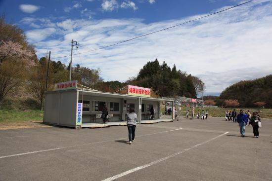 滝桜 (8)滝桜