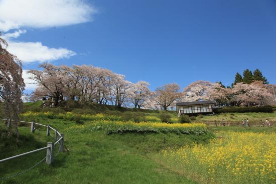 滝桜 (17)滝桜