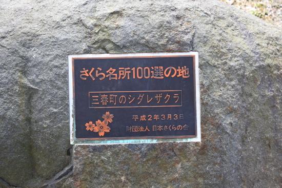 滝桜 (26)滝桜