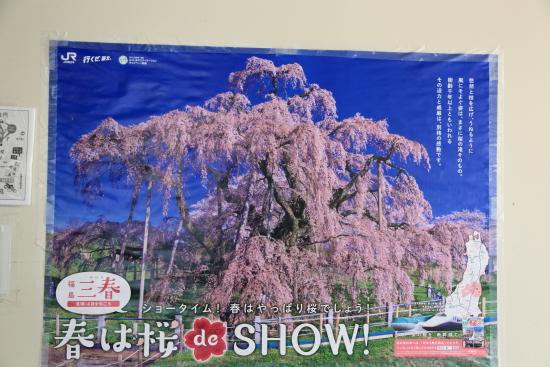 滝桜 (43)滝桜