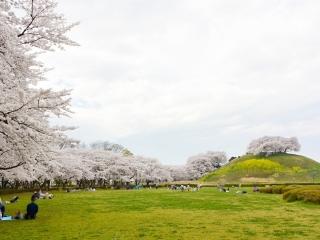 埼玉古墳公園 (1)