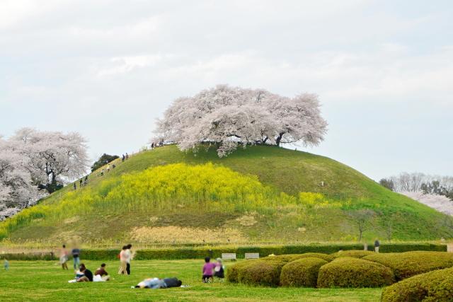 埼玉古墳公園 (2)