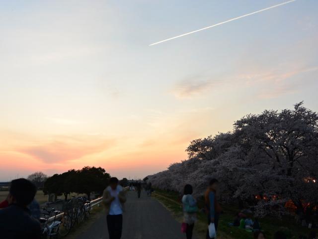 熊谷桜堤 (5)