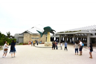 沖縄美ら海水族館 (1)